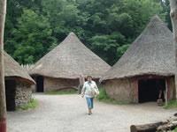 case celtice